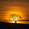 落陽、映える樹木。