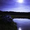 月とあじさい