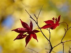 枯れ葉よ・・・