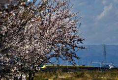 春の日のイエロー