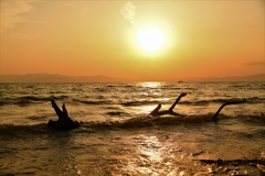 琵琶湖に住む龍