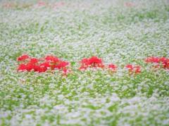 季節外れの雪に埋もれて・・・。