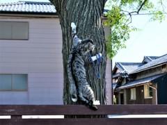 誰も登ってない木に登ってミルニャン!!