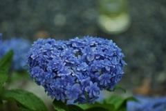 ハートムーンと紫陽花
