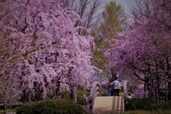 桜橋のふたり