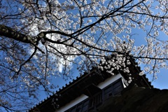 城と桜と青空と