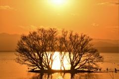 煌めく湖の水中木