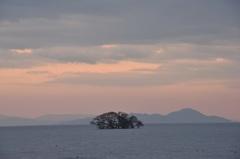 黄昏の水中木