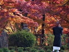 焼けた紅葉を撮る・・・。