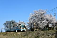 青空と桜日和の旅
