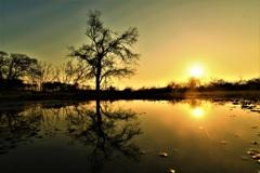 水たまりの夕景