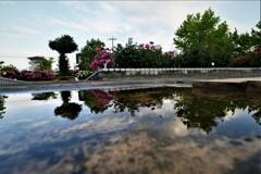 雨上がりの薔薇園