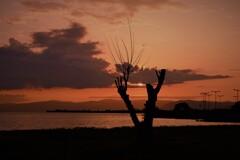Vサインの夕陽