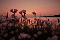 カウントダウンの夕陽