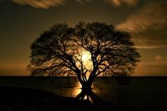 月光に燃える水中木