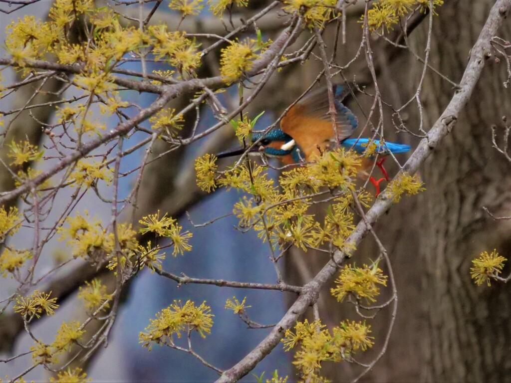花隠れの術