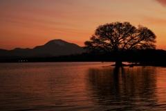 朝焼けの伊吹山と水中木