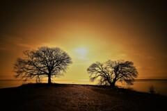 月夜にひらく樹