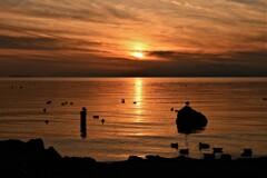 水鳥の集う夕陽