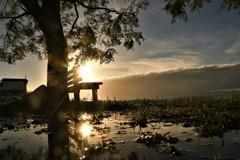 夕照のあのベンチ。