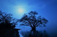 月照の水中木
