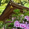 花の御寺はツツジも美しい