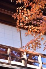 秋は明治色