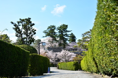 わたしの城下町 桜編