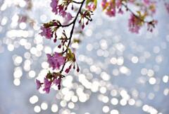 早春の煌めき 1