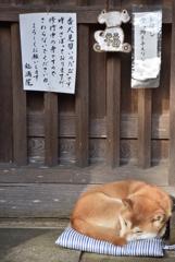 """番犬見習いの""""たび"""" ただいま修行中"""