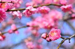 春香る季節