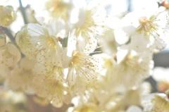 陽だまりの花々