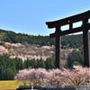 桜雲に佇む