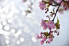 早春の煌めき 2