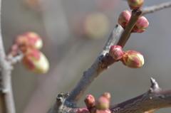春を待つこころ