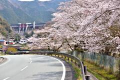 ダムと桜と名松線