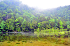雨上がりの明神池