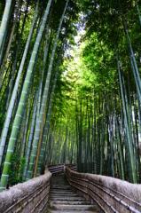 Stairway through bamboo