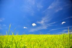 草原の夏空