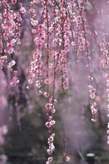 早春の煌き