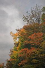 雨上がり紅葉