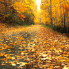 枯れ葉重なる山道