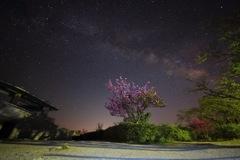 八重桜と天の川と
