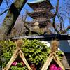 牡丹と五重塔