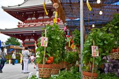 浅草 浅草寺のほおずき市