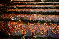 階段の落ち葉