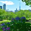 紫陽花とツリー