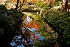 水辺に写る紅葉