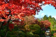 日光 逍遥園紅葉