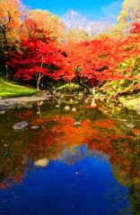 池の水面に映る碧空ともみじ (小石川後楽園)